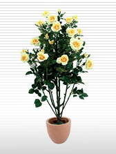 Rosebush, light-yellow,140cm